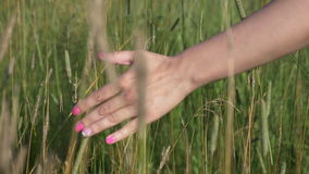 Hand moves through the grass stock video