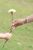 Hand of mum & girl holding flower. Girl handling flower, carnation to mum Royalty Free Stock Photography