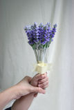 Hand of mum & kid holding lavender Stock Photography