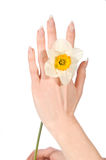 Hand with narcissus Royalty Free Stock Image
