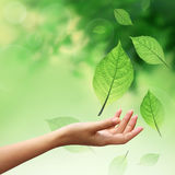 Hand with nature element leafs Stock Photos