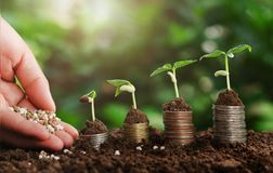 Hand nurturing fertilizer plant growing step on money Royalty Free Stock Photos