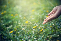 Hand nurturing and watering flower on sunshine nature background Stock Photos