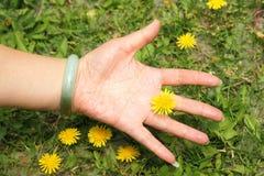 Hand och maskros Royaltyfri Bild