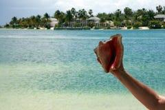 Hand och Shell Fotografering för Bildbyråer
