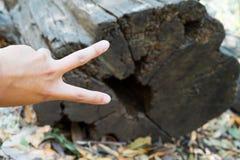 Hand och trä för v-tecken royaltyfri foto