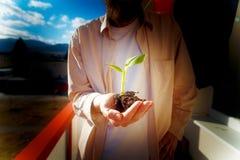 Hand och växt Miljöbegrepp effekt för 50mm bakgrundsblur aktiverar sidan för nattnikkordeltagaren Royaltyfria Bilder