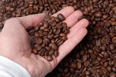 Hand Of Man And Coffee Seeds Royalty Free Stock Photos