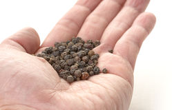 Hand offering whole peppercorn Stock Images
