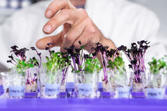 Hand ofsenior male tech selects a batch of cress-salat for testi Stock Images