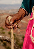 Hand of old woman. In south america, Peru Royalty Free Stock Photos