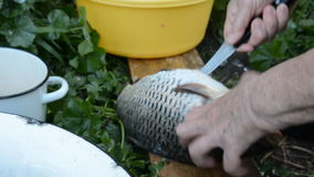 Hand of an old woman with a knife cut the carp stock footage