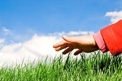 Hand op het gras Stock Foto