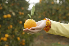 Hand with Orange Stock Photography