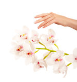 Hand and orchid Royalty Free Stock Photography