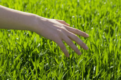 Hand over grass field Stock Photography