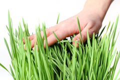 Hand over green grass Royalty Free Stock Photography