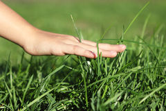 Hand på gräs Fotografering för Bildbyråer