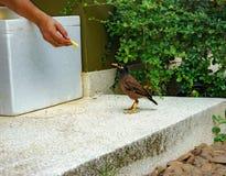 Hand på matningsfågel Arkivbilder