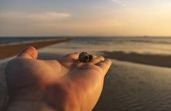 Hand på Shell Fotografering för Bildbyråer