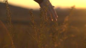 Hand på solnedgången i stäppgräs Rörande stäppgräs för hand i sol arkivfilmer