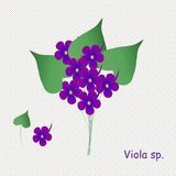 Hand paint violets, inscription Violet. Purple blue violets with yellow center, green leaves on a white speckled background Stock Photo
