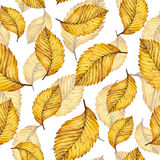 Hand paint watercolour autumn background of yellow elm. Watercolor autumn yellow leaves seamless pattern of elm, hand painted watercolour autumn background of Royalty Free Stock Photos