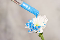 Hand paint white flower Stock Photography
