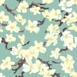 Hand painted blooming sakura seamless pattern Stock Photography