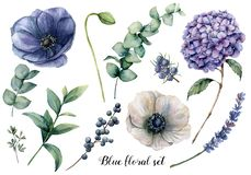 Hand painted blue floral elements. Watercolor botanical illustration with anemone, hydrangea flowers, lavender, juniper. Berries and eucalyptus leaves isolated vector illustration