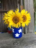 A hand painted mason jar filled with fresh sunflowers stock images