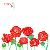 Hand painted botanical floral banner with red poppy flowers and green buds, isolated on white background. Poppies meadow vector illustration