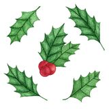 Hand painted christmas holly ilex aquifolium set isolated on the white background. Branch with leaves and red berries. New Year decoration for holiday cards Stock Photography