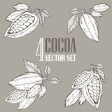 Hand painted cocoa botany illustration set. Decorative doodles of healthy nutrient food. Stock Photos