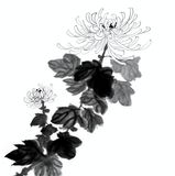 Hand Painted Crysanthemum Flower Stock Photography