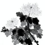 Hand Painted Crysanthemum Flowers Stock Image