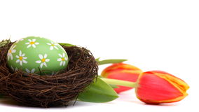 Hand painted easter egg with tulips Royalty Free Stock Images