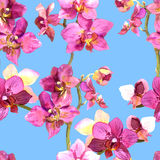 Hand painted floral background with blooming orchids Stock Photos
