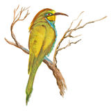 An hand painted illustration on white - Bird, European bee-eater Royalty Free Stock Photos