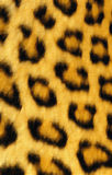 Hand-painted Leopard print Royalty Free Stock Photography