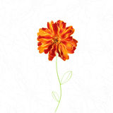 Hand-painted marigold. With glare Royalty Free Stock Image