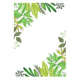 Hand painted with markers floral frame with twig, branch and green abstract leaves Royalty Free Stock Images