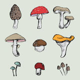 Hand- painted mushrooms set Royalty Free Stock Photography
