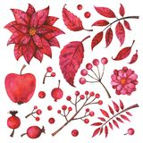 Hand painted red branches, fruit, flower, plants and berries isolated on white background. Winter and fall watercolor floral elements set. Hand painted red royalty free illustration