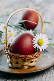 Easter Eggs and daisy flower Royalty Free Stock Images
