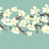 Hand painted textured blooming white sakura seamless border Stock Photos