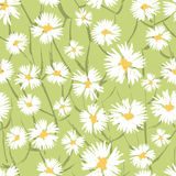 Hand painted textured  daisy flowers seamless pattern Royalty Free Stock Photos