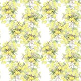 Hand painted watercolor illustration. seamless pattern with lemon tree branch elements. stock illustration