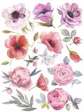 Watercolor set with garden flowers. Hand drawn illustration on white background. royalty free illustration