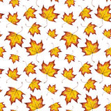 Hand painted watercolor autumn background of falling leaf maple. Watercolour seamless pattern of autumn leaves maple, hand paint watercolor autumn background of Royalty Free Stock Photography